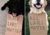 All Dog Lives Matter