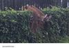 Deer, you fucked up. I know , deer.