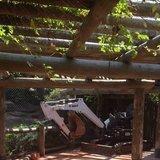 Stunning photo of a <b>bobcat</b> at the zoo